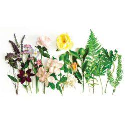 Sensatia Botanicals